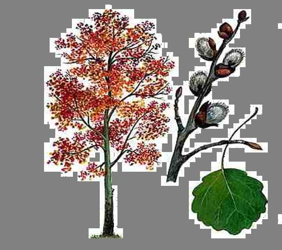 Из жизни растений