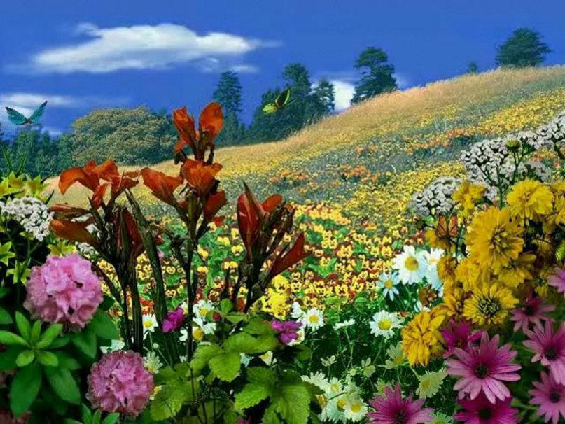 Красота растений летом 185